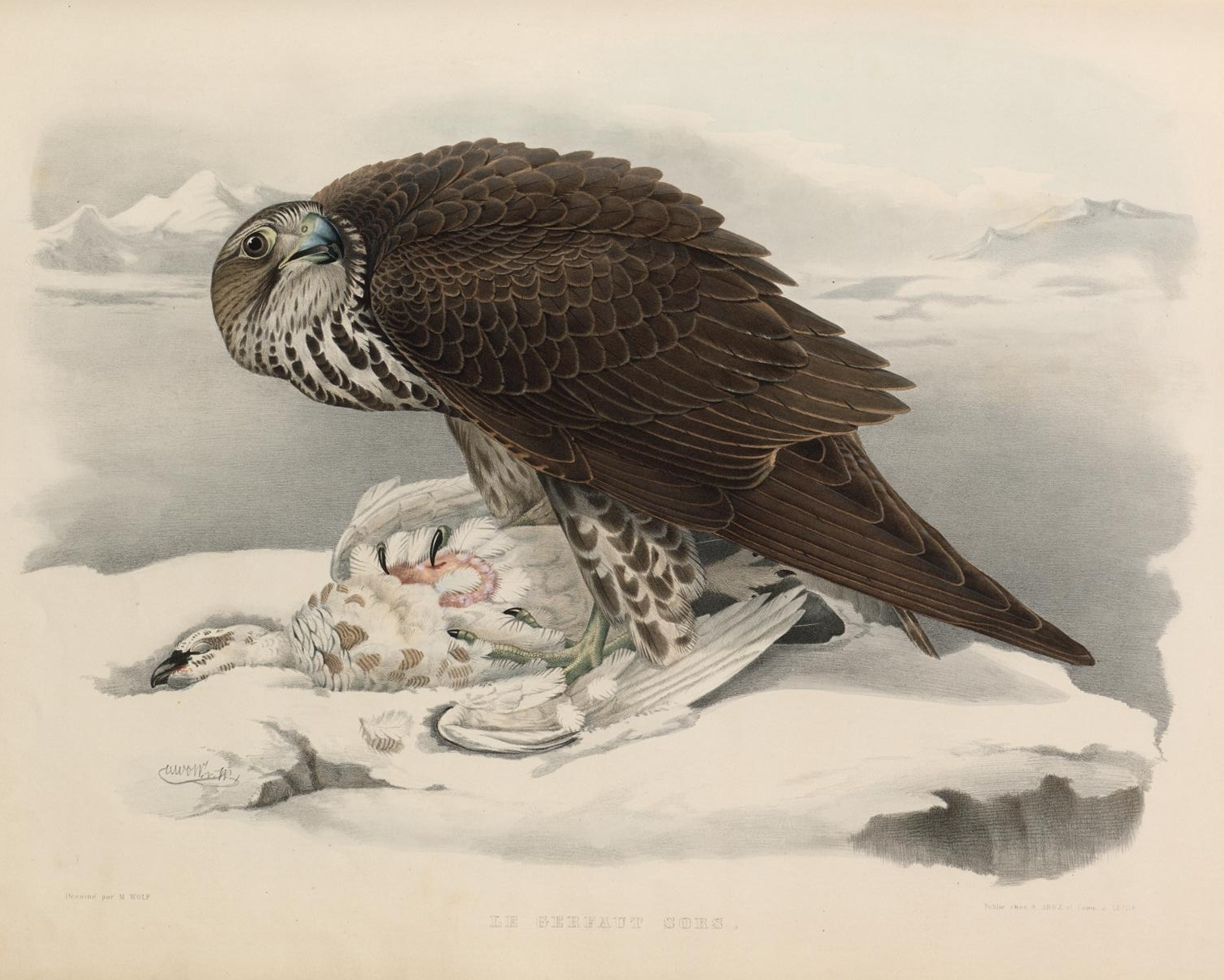 lithograph of crouched raptor