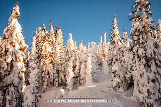 Picture of the Day showing big white ski resort near sunrise hours on a blue sky day with a fresh coating of powder snow, by Chris Gardiner Photography,
