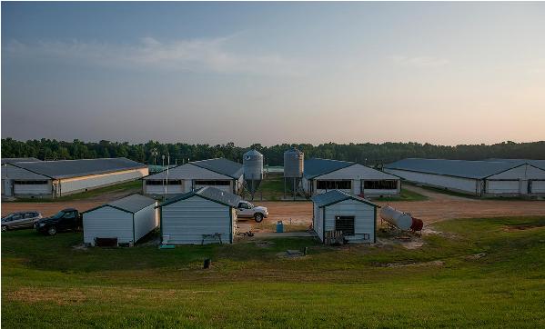 Hình 6. Thiết kế các khu nhà chăn nuôi liền kề (Nguồn: wholehognc.org)