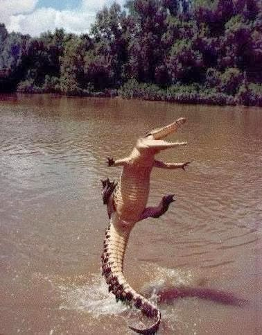 the happiest alligator