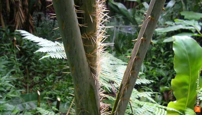 apa kekurangan dan keunggulan bambu kayu dan rotan