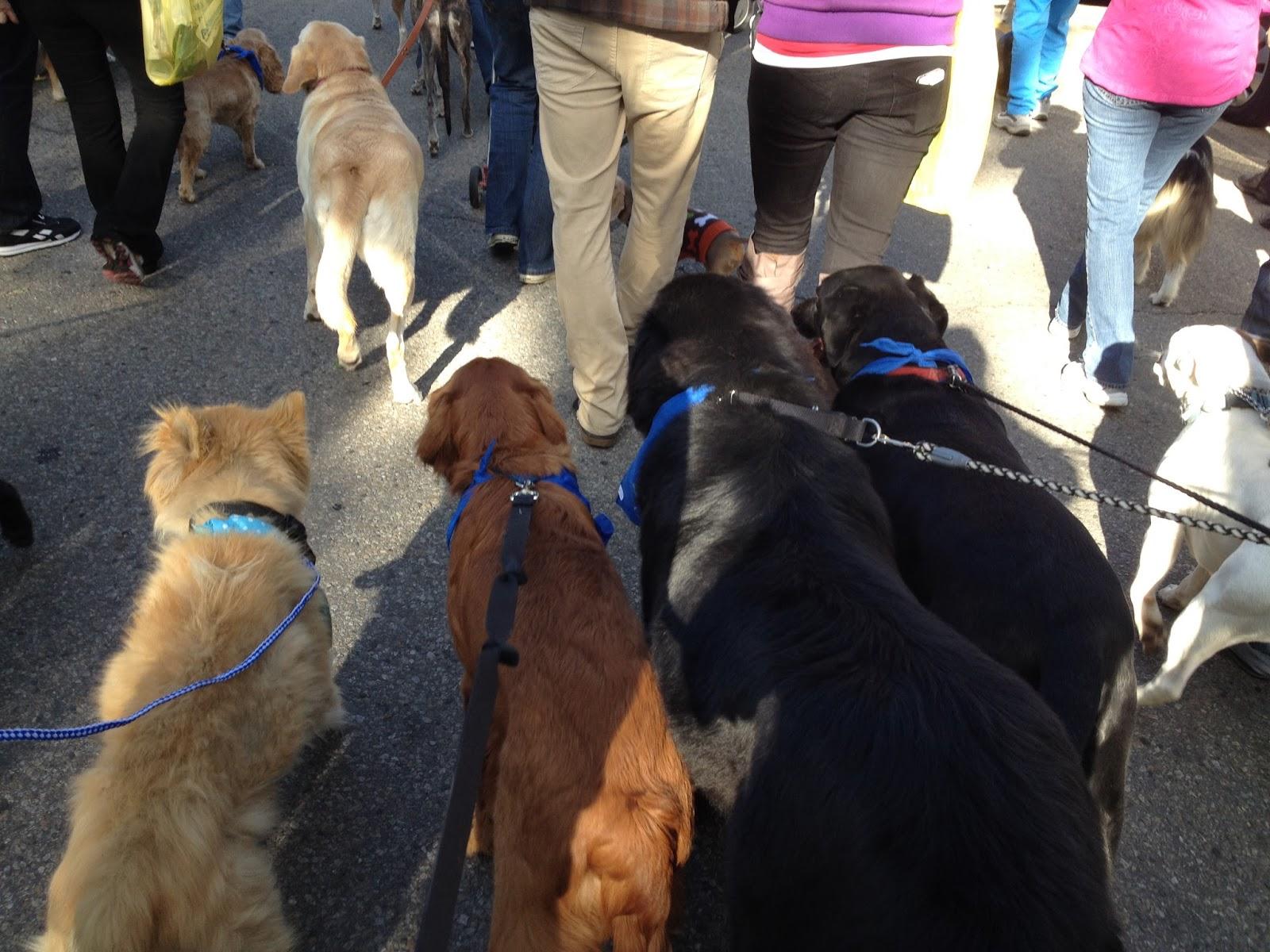 See Spot Walk Boise