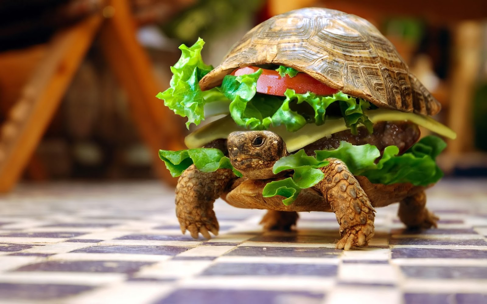 Cool Tortoise Pictures HD Download