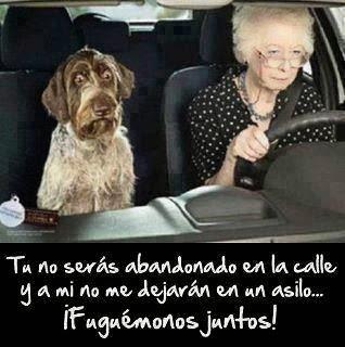Abuela y perro fuguemonos juntos