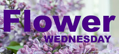 Flower Wednesday