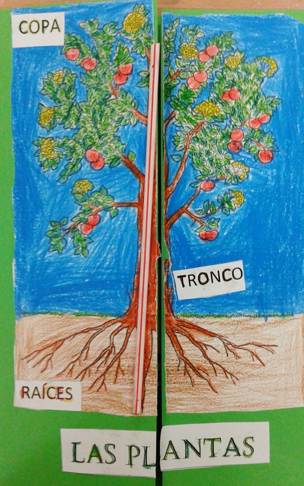 El Blog De La Maestra Berta Lapbook Las Plantas