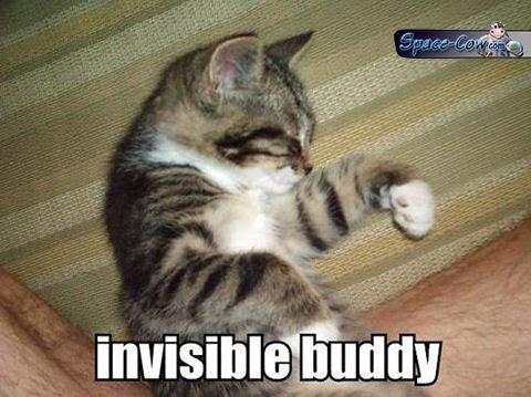 funny cute cat sleeping