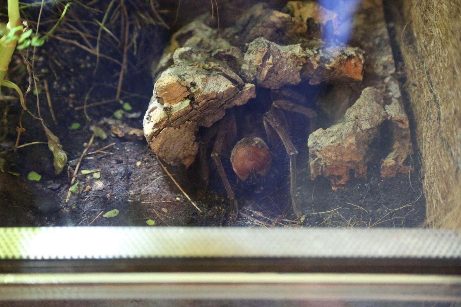 danske ordsprog Odense Zoo