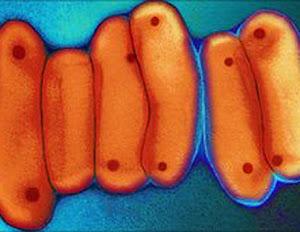 bacterias tuberculosis