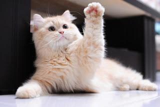 Funny Cat Raises Paw