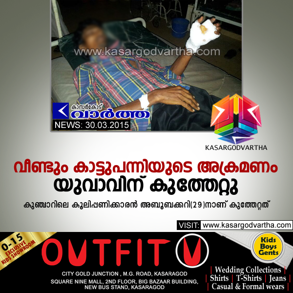 Badiyadukka, General Hospital, Kasaragod, Kerala, Injured, Pig Attack, Pig attacks: yougster injured