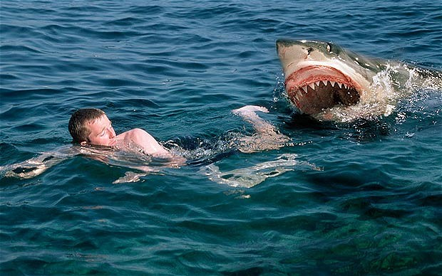 Shark Attack Beach 10 Most Dangerous Places For Attacks