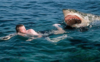 Shark Attack Beach: 10 Most Dangerous Places for Shark Attacks