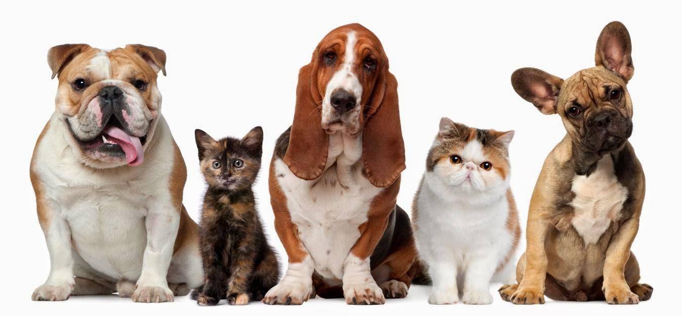 Esterilización de Mascotas Machos
