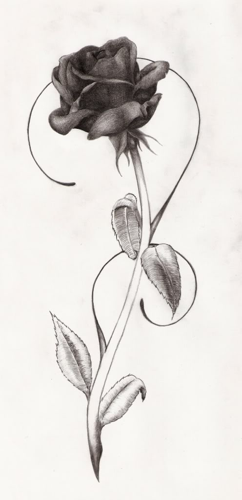 freya-thesilverlining: Black rose tattoo design