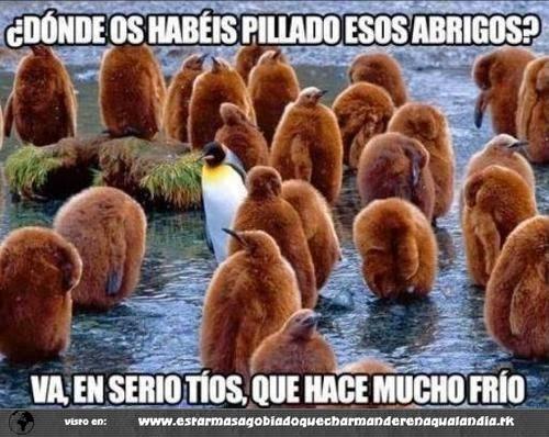 Pinguinos bromistas
