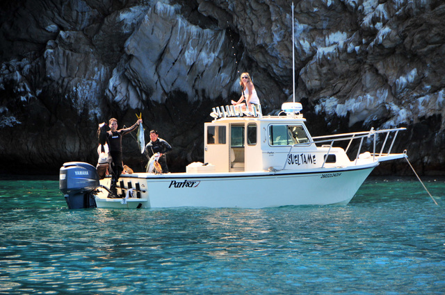 Fishing diving and spearfishing reports and pictures for San carlos mexico fishing
