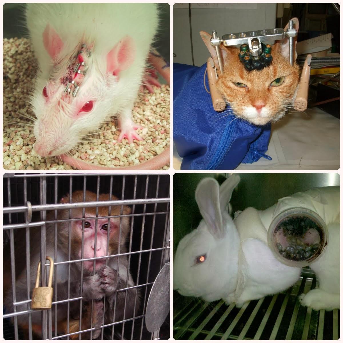 Hayvanlar deneylerde kullanılmasın!