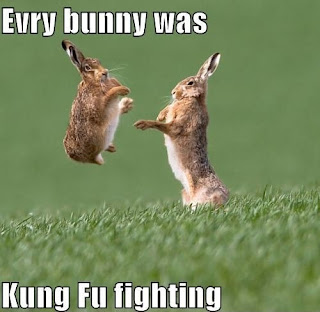 funny image Evry bunny was kung fu fighting
