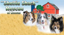 Sheltie Shack