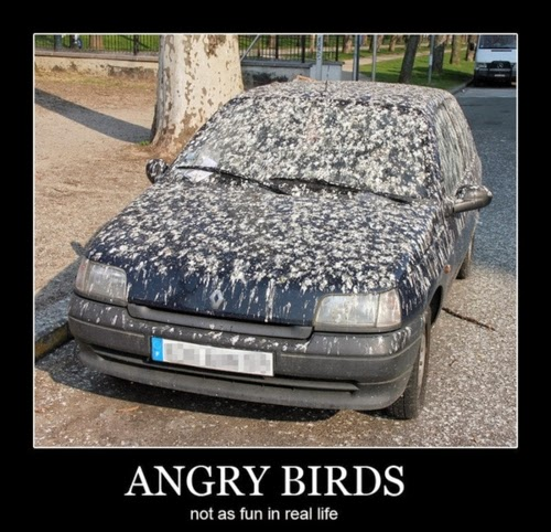 angry birds poop all over car funny photo