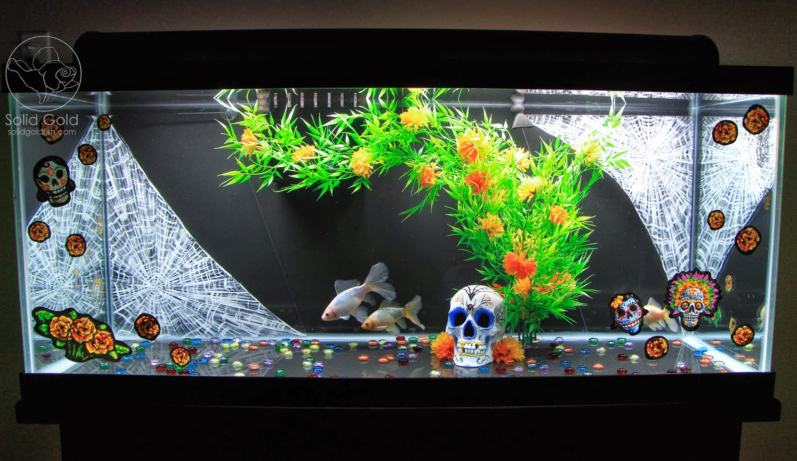 Dia de los muertos goldfish tank solid gold aquatics for Aquarium decoration for goldfish