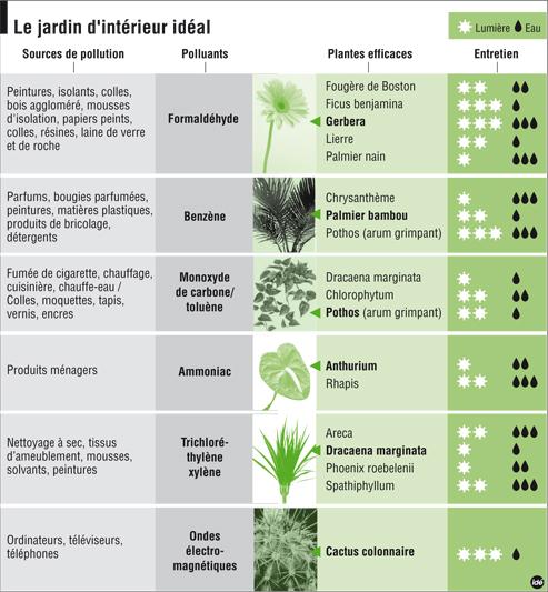 Le club d co 39 zeuses d 39 art les plantes d polluantes for Plantes depolluantes
