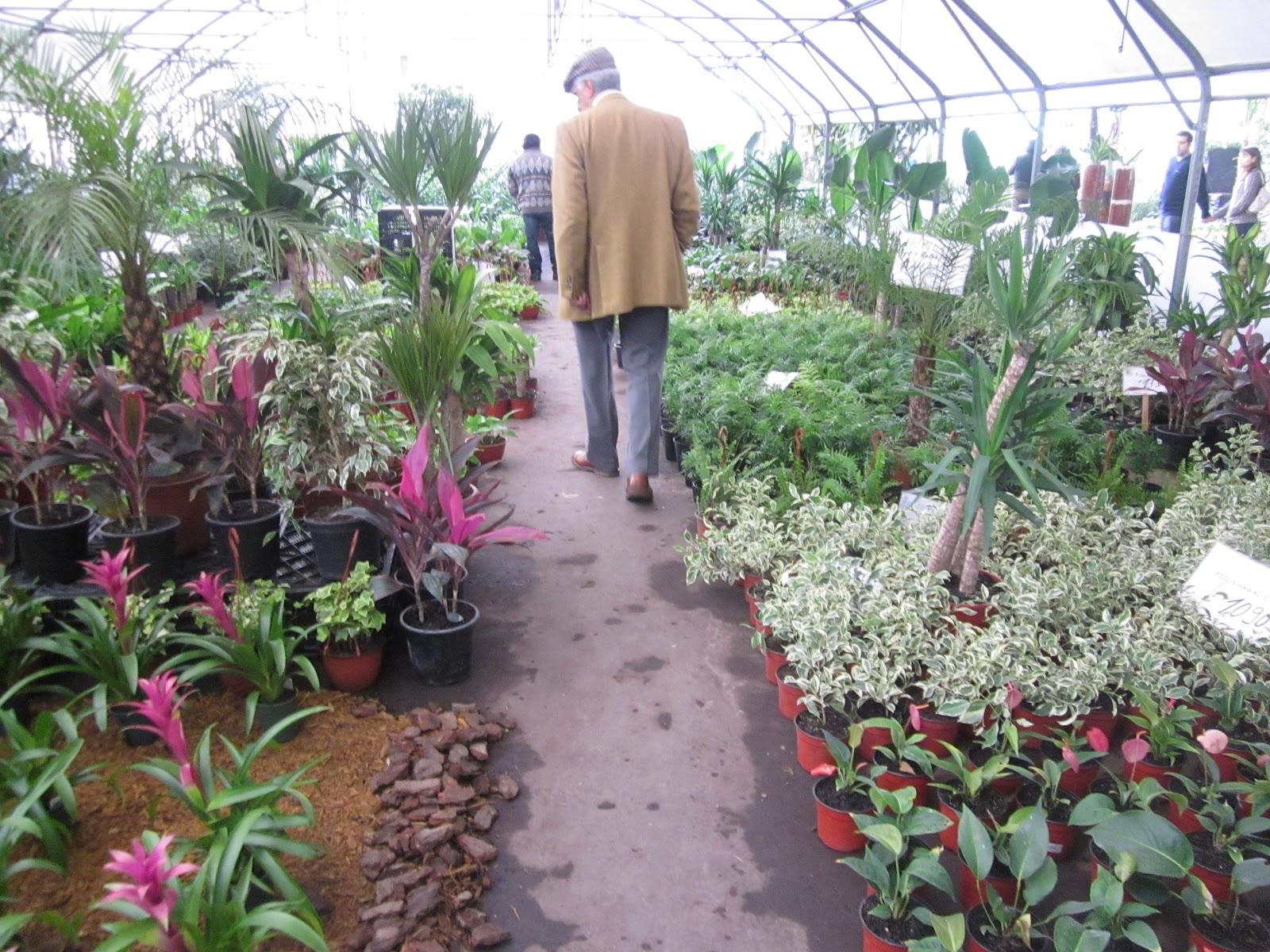 Ruta la gourmet de la p rgola al terminal de las flores for Viveros plantas de interior