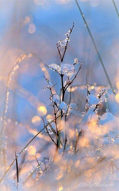 Коллекция зимних впечатлений. Блог Вся палитра впечатлений