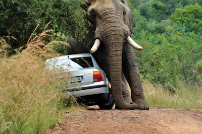 What Not To Do On A Safari Seen On www.coolpicturegallery.us