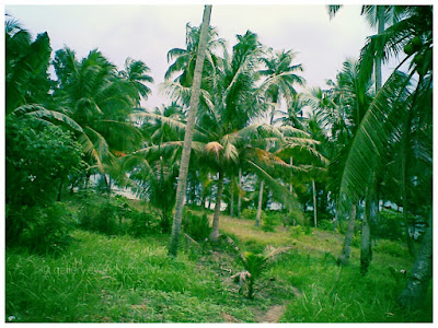 Village view, Bintan, Riau Islands - Indonesia