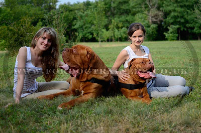 Dogue de Bordeaux Pictures