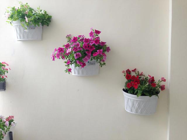 Chậu trồng hoa ốp tường trang trí bức tường sinh động, phong cách riêng