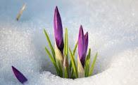 Пришла красавица Весна