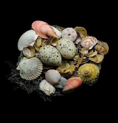 nido de charran del caspio