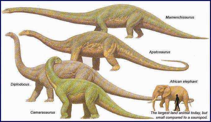 Dinosaur mungkin ada di Malaysia berjuta tahun lalu