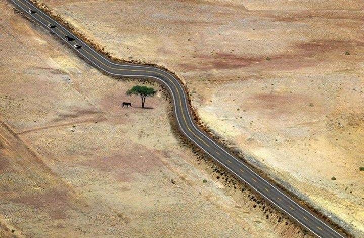 Pembuatan Jalan tanpa menebang pohon