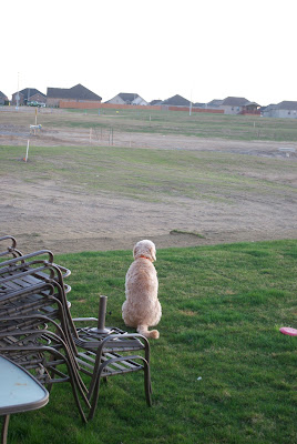 Dog Looking Into Distance