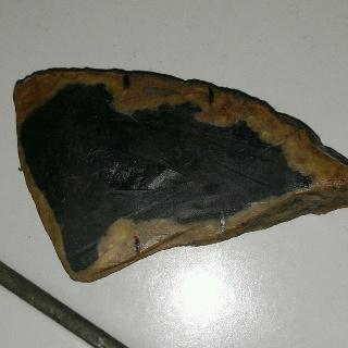 perawatan awal black opal akar