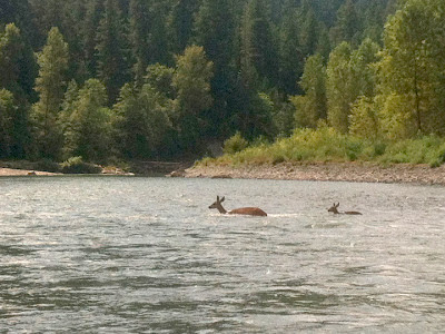 Sandy River deer crossing