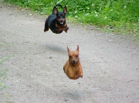 Amazing Animals Jump  Nice Pics hot images
