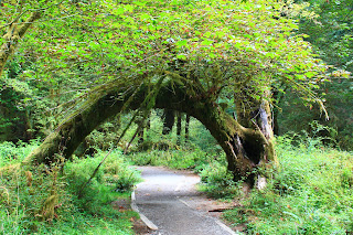 pacific northwest forest  The 3 mile hiking trail
