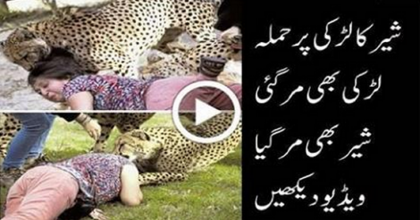 Loin attacked But Loin Killed  - Video Leaked - Asongpk.Me