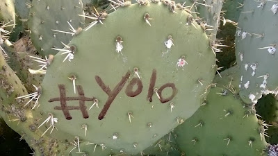 Hashtags and Phrases on Cactus Pads