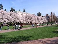 blossom trees