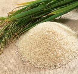Rice Procurement Crosses 99 Lakh Tonne