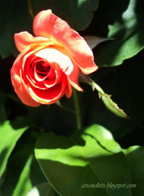 De nada vale, o que tens. Apenas tem valor o que dás... generosidade, esperança, integridade, alegria, verdade, paixão, serenidade, paz... / Is worth nothing, all you have. All that matters is what you give... generosity, hope, integrity, joy, truth, passion, serenity, peace...