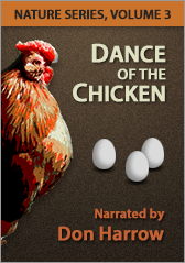 Nature series, volume 3: Dance of the Chicken