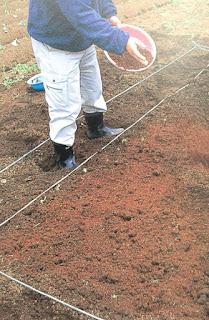 Hướng dẫn trồng khổ qua trên sân thượng đơn giản
