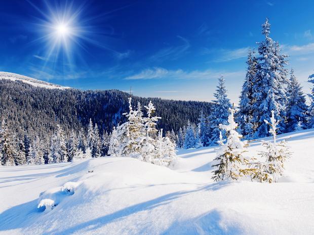 bare trees winter snow wallpaper